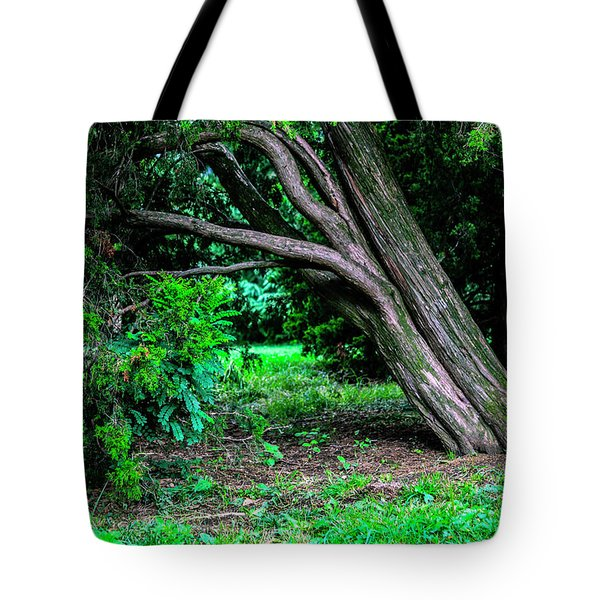 Tote Bag featuring the photograph Portrait Of A Tree by Madeline Ellis