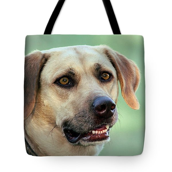 Portrait Of A Yellow Labrador Retriever Tote Bag by Sheila Brown