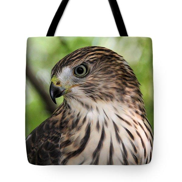 Portrait Of A Young Cooper's Hawk Tote Bag