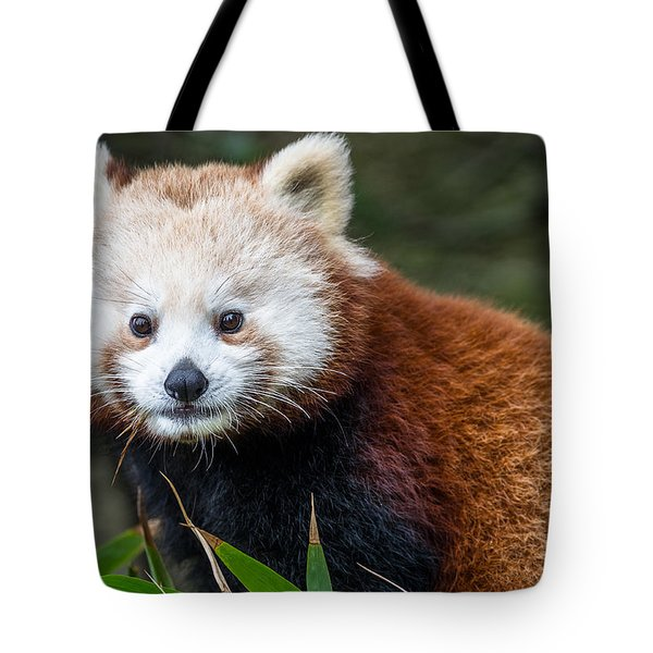 Portrait Of Cini The Red Panda Tote Bag by Greg Nyquist