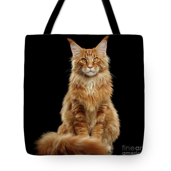Portrait Of Ginger Maine Coon Cat Isolated On Black Background Tote Bag