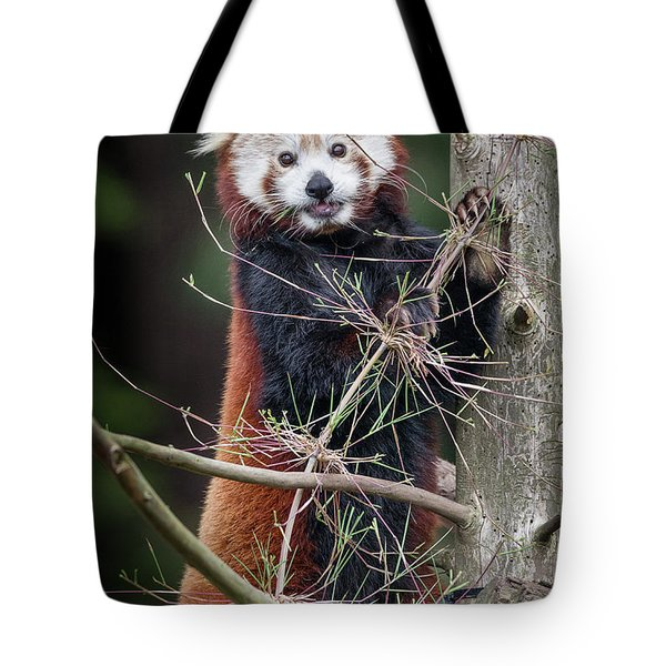 Portrat Of A Content Red Panda Tote Bag by Greg Nyquist