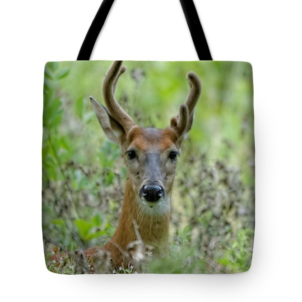 Portriat Of Male Deer Tote Bag