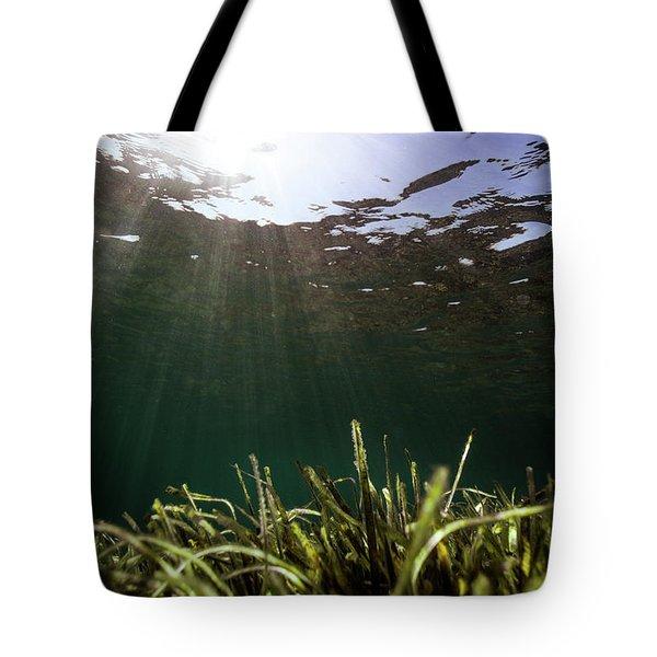 Posidonia Tote Bag