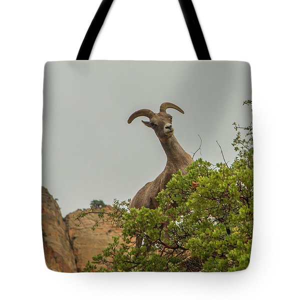 Posing For The Camera 2 Tote Bag