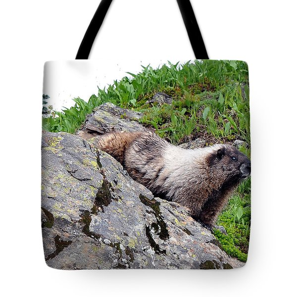 Tote Bag featuring the photograph Posing Marmot by Rebecca Parker