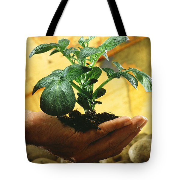 Potato Plant Tote Bag by Science Source