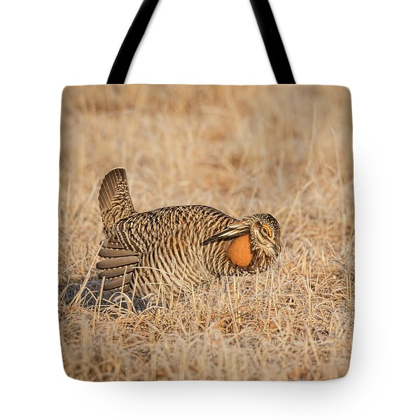 Tote Bag featuring the photograph Prairie Chicken 9-2015 by Thomas Young