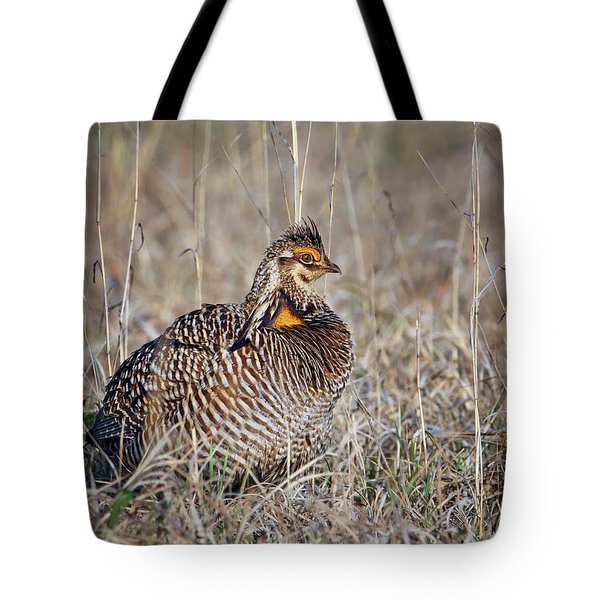Tote Bag featuring the photograph Prairie Chicken - Portrait by Nikolyn McDonald