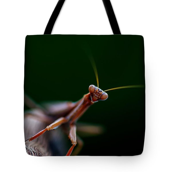 Tote Bag featuring the photograph Praying Mantis by Rob Hemphill