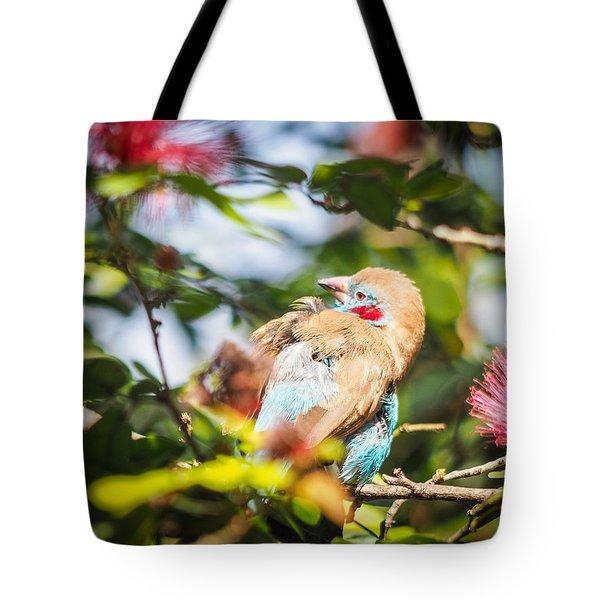 Red Cheeked Cordon Bleu Finch Tote Bag