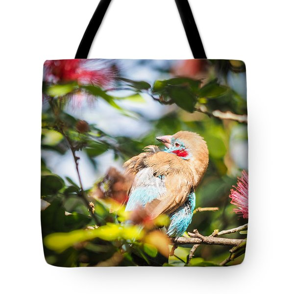 Red Cheeked Cordon Bleu Finch Tote Bag