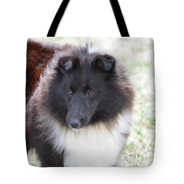 Pretty Black And White Sheltie Dog Tote Bag by DejaVu Designs