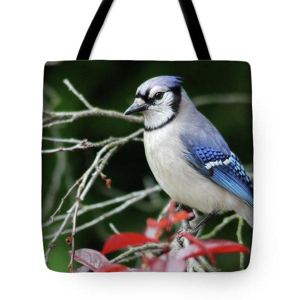 Pretty Blue Jay Tote Bag