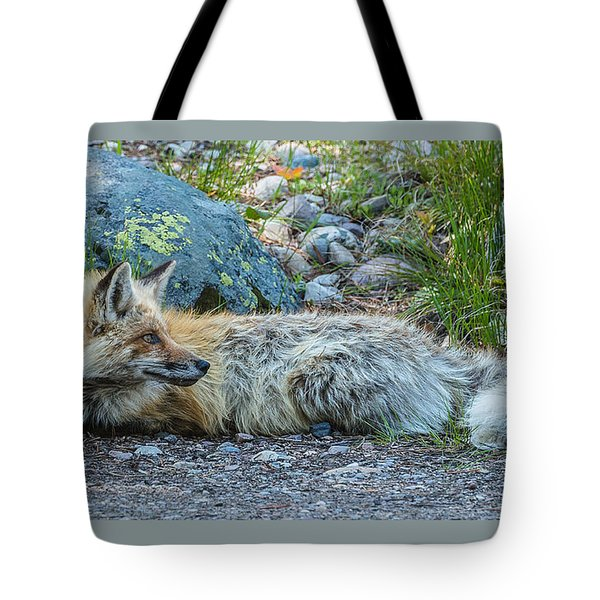 Tote Bag featuring the photograph Pretty Boy Fox In Spring by Yeates Photography