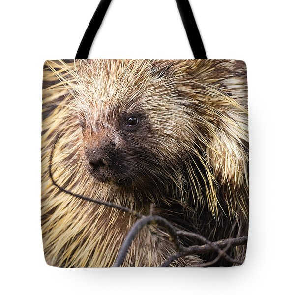 Tote Bag featuring the photograph Prickly Character by Aaron Whittemore
