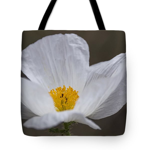 Prickly Poppy Tote Bag