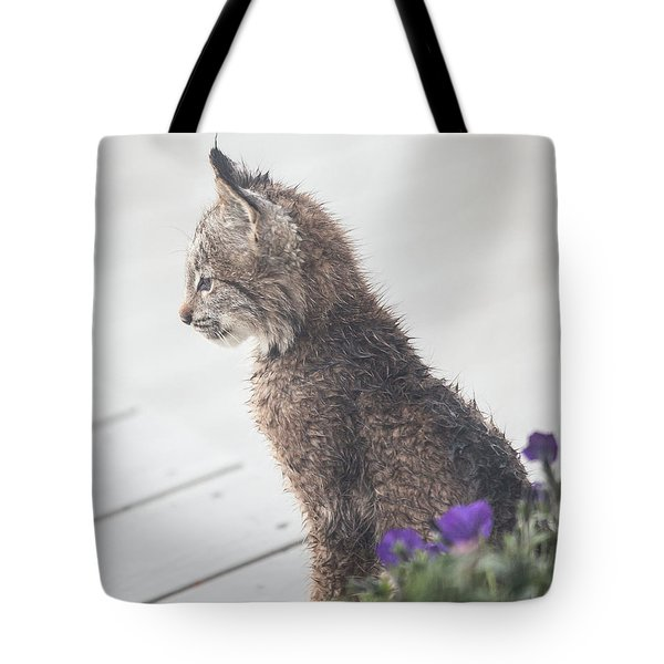 Profile In Kitten Tote Bag