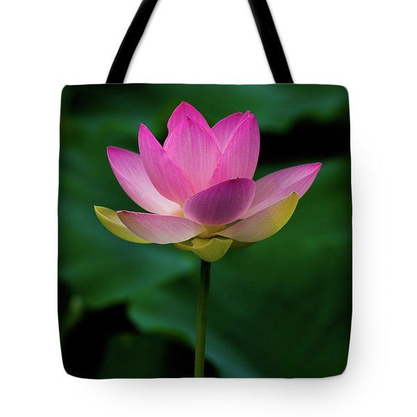 Tote Bag featuring the photograph Profile Of A Lotus Lily by Dennis Dame
