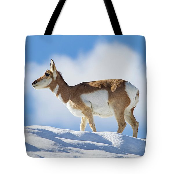 Pronghorn Doe On Snowy Ridge Tote Bag