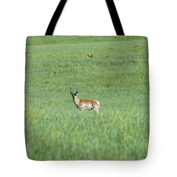 Pronghorn In A Sea Of Green Tote Bag