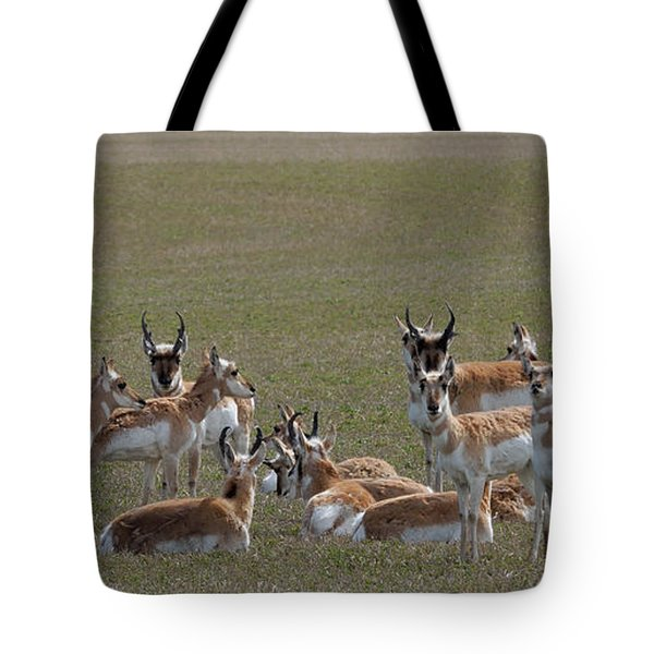 Tote Bag featuring the photograph Pronghorns On Alert by Kae Cheatham
