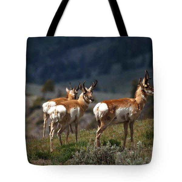 Pronghorns Tote Bag