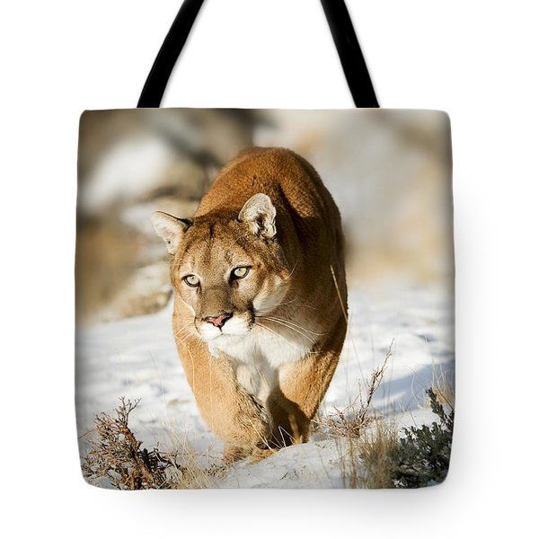Prowling Mountain Lion Tote Bag