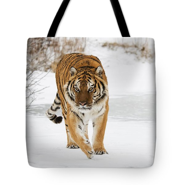 Prowling Tiger Tote Bag