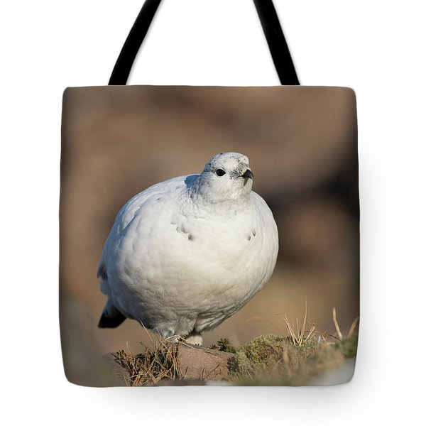 Tote Bag featuring the photograph Ptarmigan Going For A Stroll by Karen Van Der Zijden