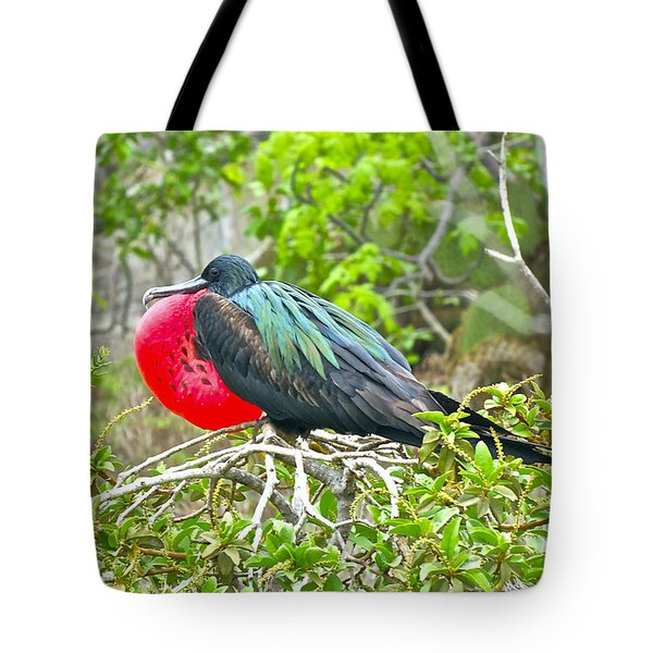 Puffing Up When Courting Tote Bag