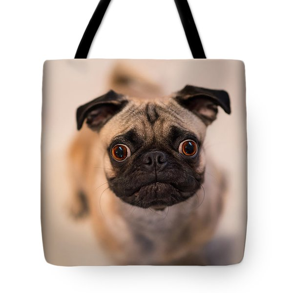 Tote Bag featuring the photograph Pug Dog by Laura Fasulo