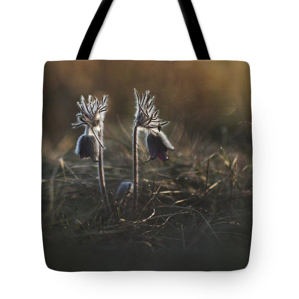 Tote Bag featuring the photograph Pulsatilla Nigricans by Davorin Mance