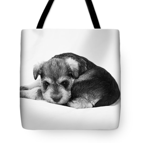 Tote Bag featuring the photograph Puppy 1 by Serene Maisey