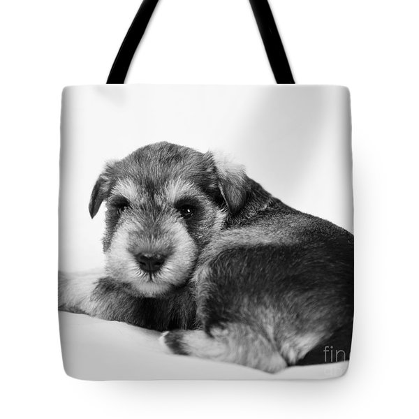 Tote Bag featuring the photograph Puppy 3 by Serene Maisey