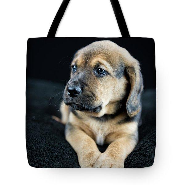 Puppy Portrait Tote Bag