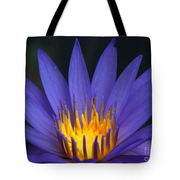 Purple And Yellow Water Lily Tote Bag by Sabrina L Ryan