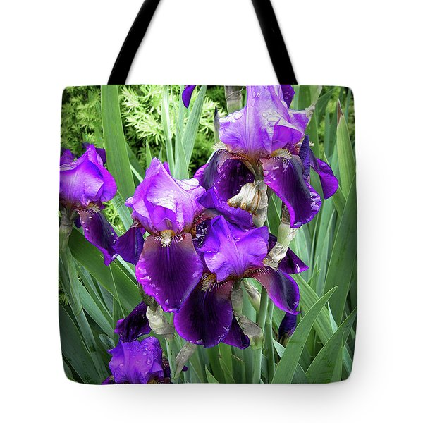 Tote Bag featuring the photograph Purple Bearded Irises by Penny Lisowski