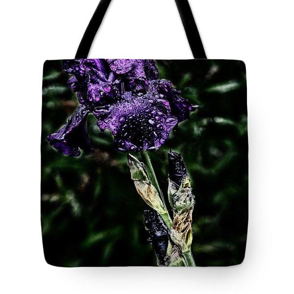 Purple Crocus Tote Bag by Darleen Stry