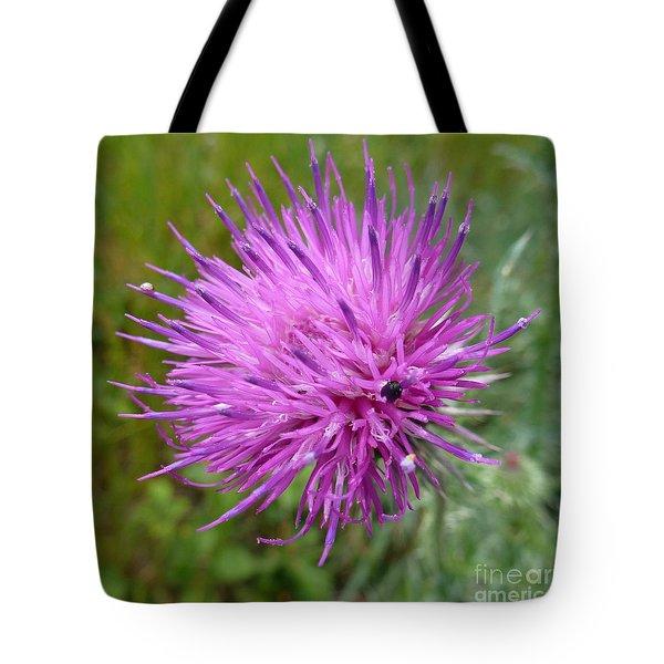 Purple Dandelions 2 Tote Bag by Jean Bernard Roussilhe