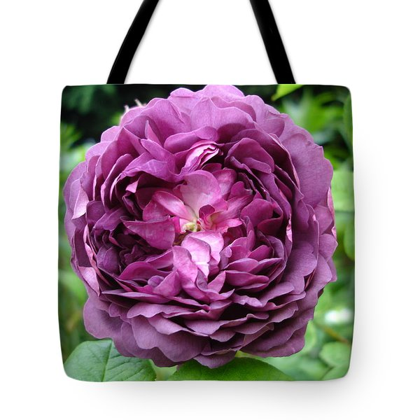 Purple English Rose Tote Bag