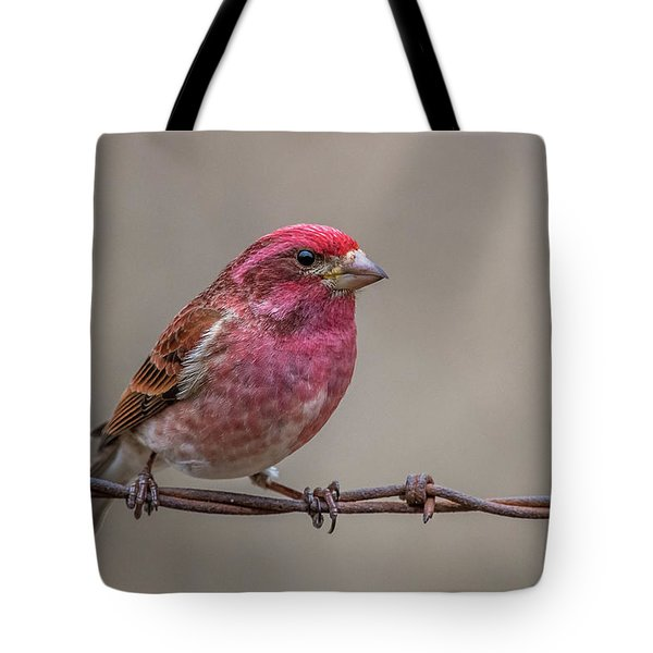 Tote Bag featuring the photograph Purple Finch On Barbwire by Paul Freidlund