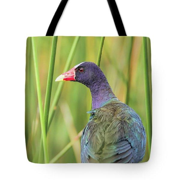 Purple Gallinule Tote Bag