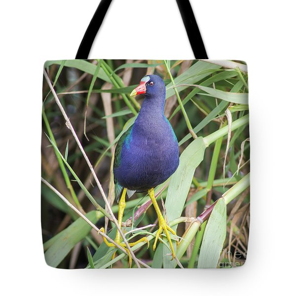 Tote Bag featuring the photograph Purple Gallinule by Robert Frederick