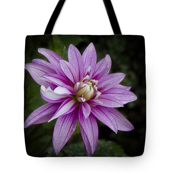 Purple Pink Dahlia Tote Bag