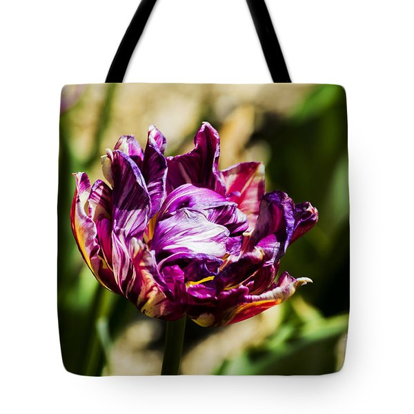 Tote Bag featuring the photograph Purple Striped Tulip by Angela DeFrias