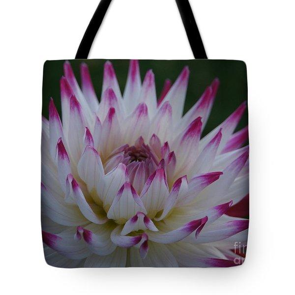 Purple Tipped Starburst Dahlia Tote Bag