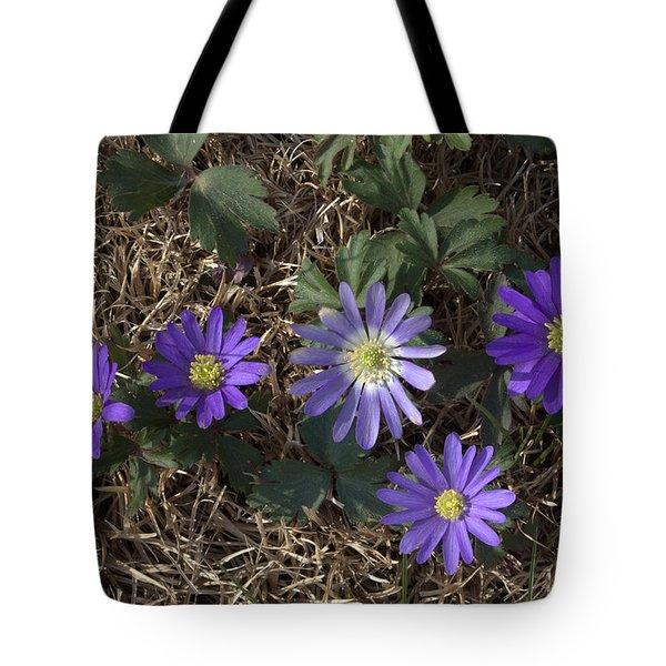 Purple Yard Flowers Tote Bag by Liz Allyn