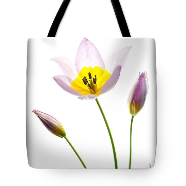 Purple Yellow Tulip 1 Tote Bag