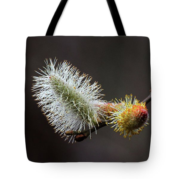 Pussy Willow Stony Brook New York Tote Bag